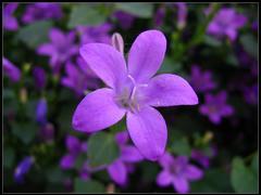 Fleur sauvage au nom inconnu