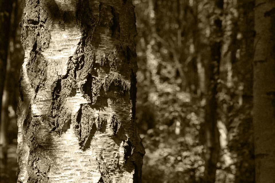 Tree du Boulet
