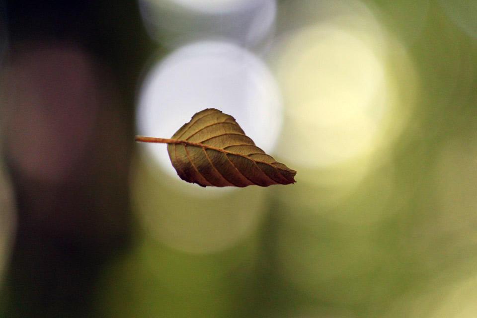 Leaf du Boulet