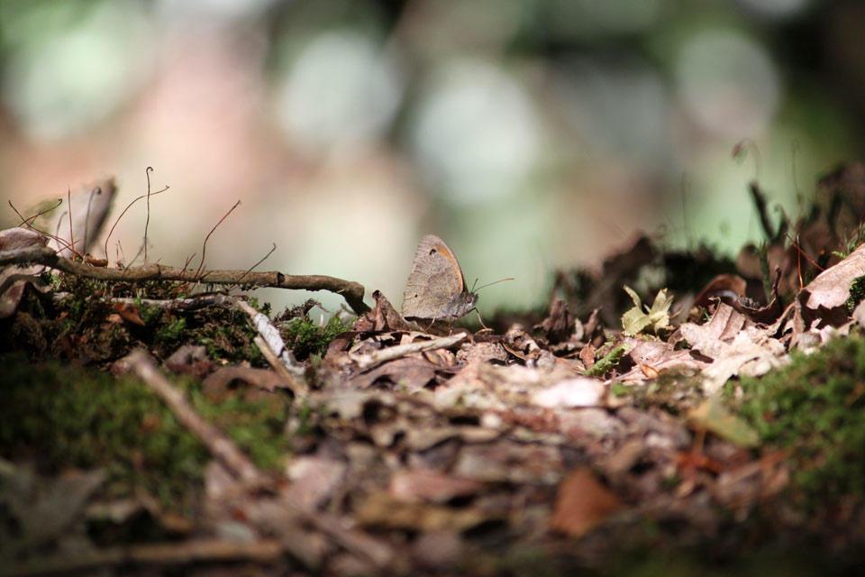 Butterfly du Boulet