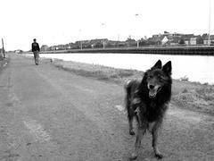Ruisbroek dog